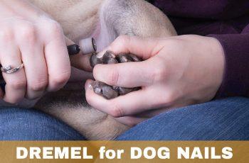 Dremel Dog Nail Grinder